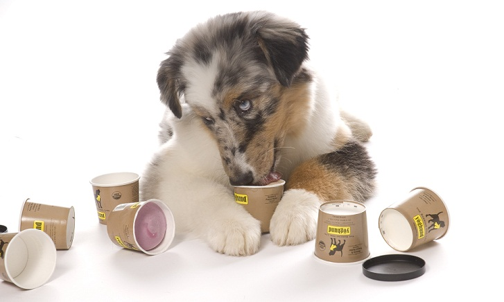 đồ ăn cho chó, đồ chơi cho chó, đồ chơi chó mèo, phụ kiện chó mèo, sữa tắm nước hoa chó mèo, thức ăn cho chó, thức ăn cho chó anf, thức ăn cho chó becgie, thức ăn cho chó biếng ăn, thức ăn cho chó cảnh, thức ăn cho chó con, thức ăn cho chó ganador, thức ăn cho chó giá rẻ, thức ăn cho chó lai, thức ăn cho chó lớn, thức ăn cho chó lông xù, thức ăn cho chó mẹ, thức ăn cho chó mèo, thức ăn cho chó nhật, thức ăn cho chó nhật con, thức ăn cho chó nhỏ, thức ăn cho chó phốc, thức ăn cho chó pug