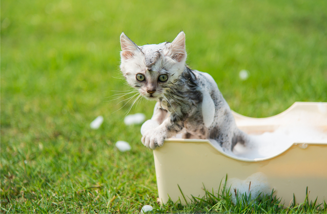 https://www.petcity.vn/media/news/0404_petmd-kitten-bath.jpg