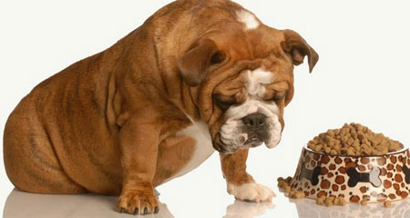 Image result for thực phẩm không nên cho chó ăn