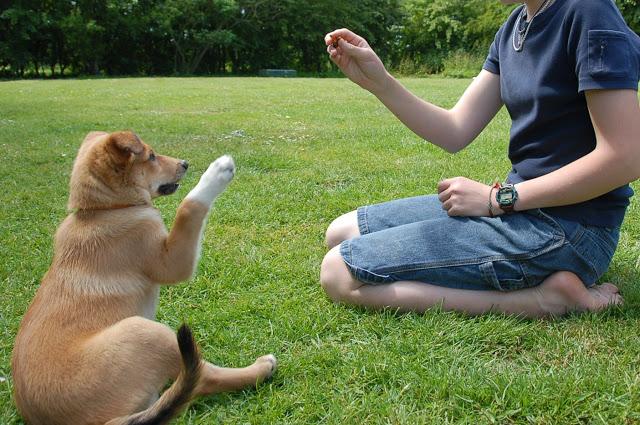 8 mẹo dễ dàng huấn luyện thú cưng hơn