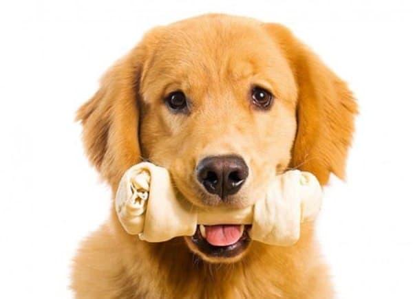 Cách chọn đồ chơi cho chó gặm khiến bé nào cũng thích mê