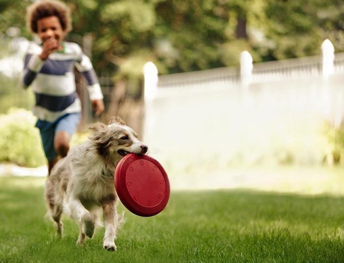 có nên chôn chó trong nhà?