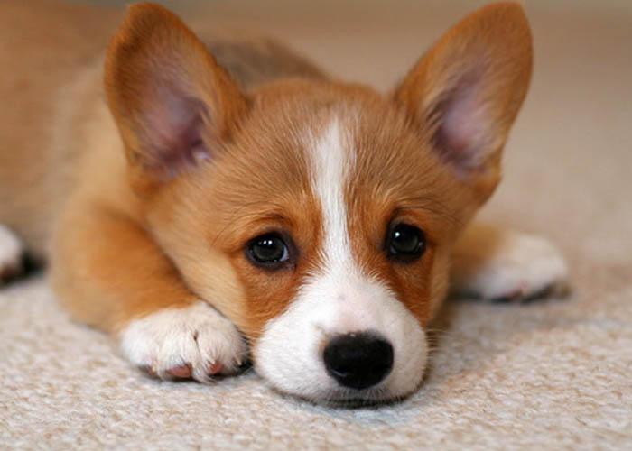 Những trào lưu làm đẹp cho chó cần phải lên án